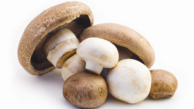 medley-mushrooms
